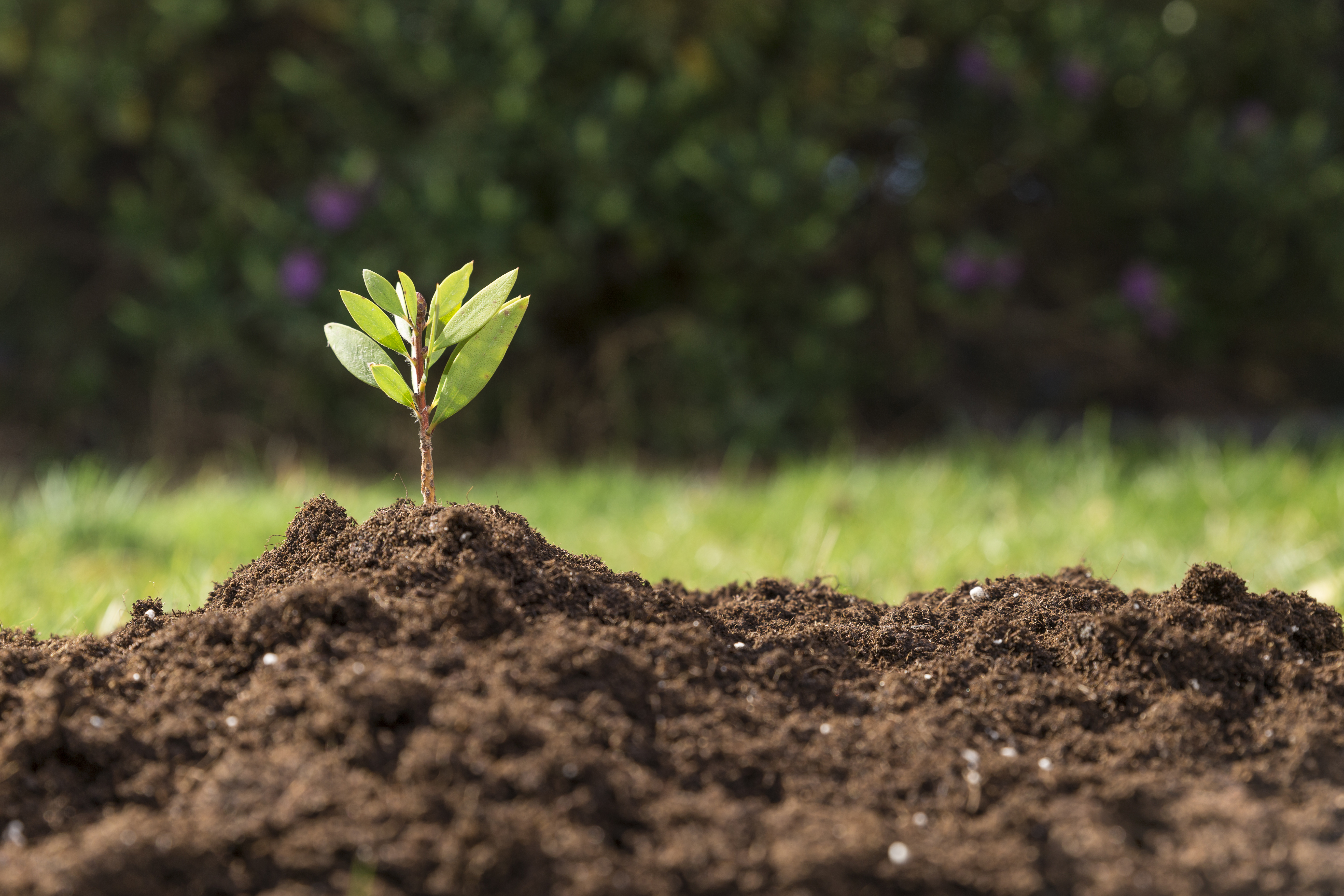 Трябва ли икономическия растеж да бъде за сметка на екологията?